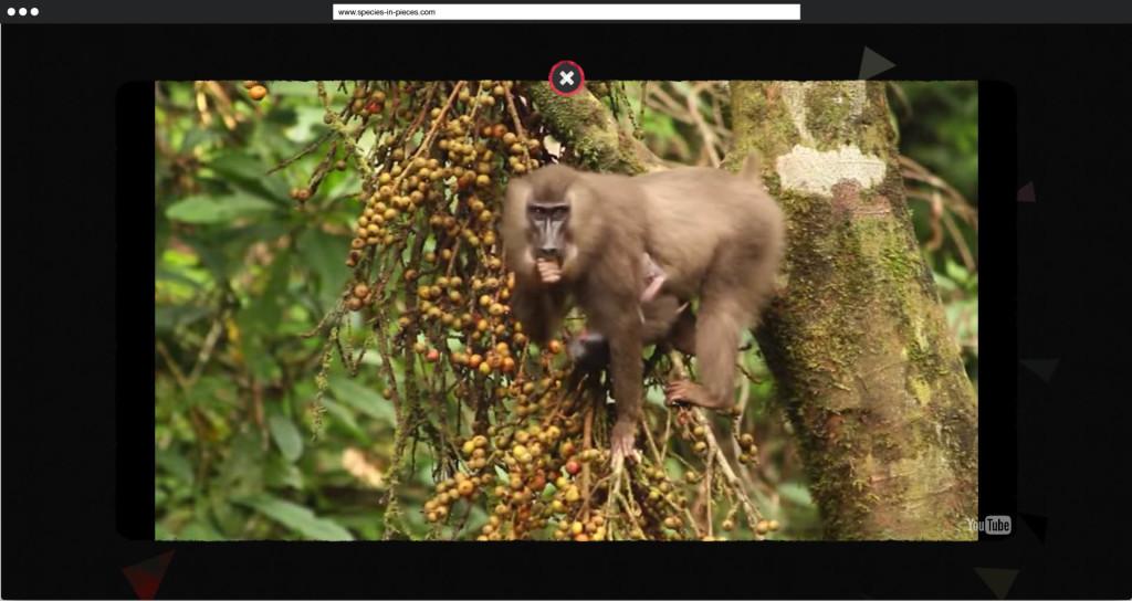 Beispielhaftes Video   Species in Pieces   30. DrillIII